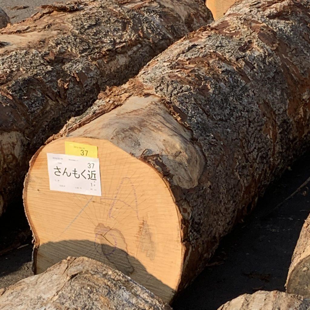 落札されたトチの原木
